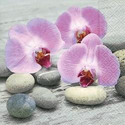 Guardanapo GD-179 (200155) Orquídeas em Pedras - com 1 unidade