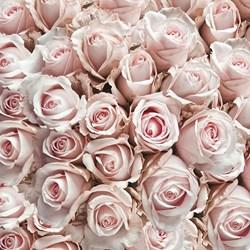 Guardanapo GD-307 (13311450) Rosas Pastel - com 1 unidade