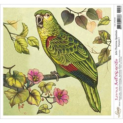 Papel para Arte Francesa Quadrada Litoarte AFQ-030 Papagaio I